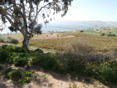 Mount of Beatitudes, looking down to banana plants and to Sea of Galilee