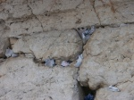 Prayers placed in the Western Wall
